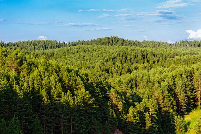 russia-boreal-taiga-large-opti.jpg